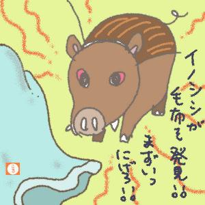 猪に追いかけられる!?